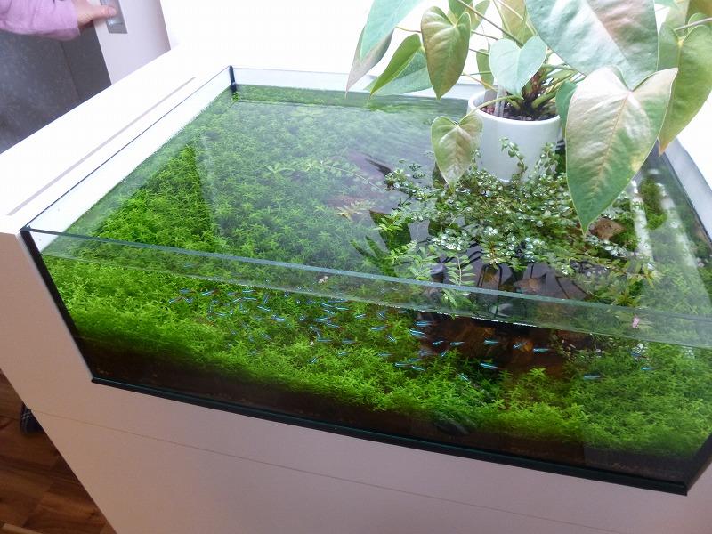 造作した水槽
